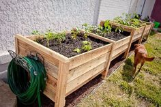 Make easy raised garden beds from 2 pallets ~ frames are built from the pallet runners and a vertical dado is cut on either side in which the horizontal side panels slide into. This proves to be very helpful when filling with soil. Just take the front panels off and dump straight from a wheelbarrow ~ lumberjocks.com