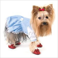 halloween costumes for small girl dogs google search