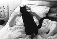 cat cat cat cat cat cat