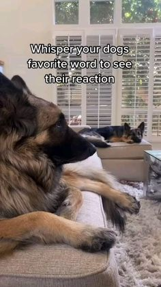Cute Wild Animals, Baby Animals Pictures, Super Cute Animals, Cute Animal Photos, Cute Animal Videos, Cute Little Animals, Funny Animal Pictures, Cute Baby Dogs, Cute Funny Dogs