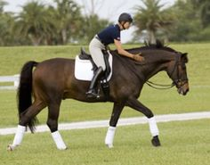 Show Tips for a Happy Horse