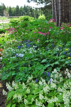 Woodland Flowers in May