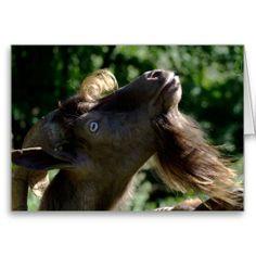 Billy Goat - Ziegenbock - Card