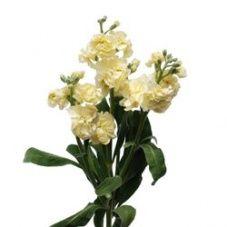 57 Best Peach Wedding Flowers Images Burgundy Flowers Flowers