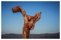 Angel, olive wood ph. Denis De Luca