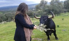 Would you like to enjoy a day surrounded by #BravoBulls in #Spain? http://bit.ly/1Et8L9g  #travel #adventure