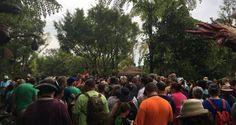 10 Ways To Survive A Crowded Day At Walt Disney World's Animal Kingdom – DisneyDining