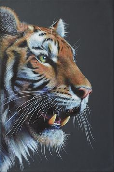 ARTFINDER: Tiger Masterful by Karl Hamilton-Cox - An original Tiger painting, box-framed and ready to wall hang, measures Reserved for my solo exhibition in Hereford until 6 September Big Cats Art, Cat Art, Beautiful Cats, Animals Beautiful, Beautiful Pictures, Chat Lion, Animals And Pets, Cute Animals, Wild Animals