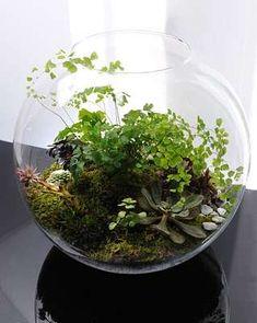 Fishbowl Landscapes : Grow Little Terrariums