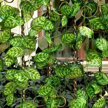 Simulación de la hoja verde de pavo real deja la viga pared planta con Centro de flores con hojas de material de ingeniería de materiales(China (Mainland))
