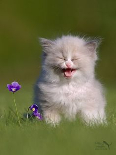 """Kitty: """"that is hilarious"""""""