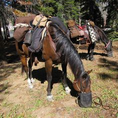 The PCT on horseback - Trail Ride