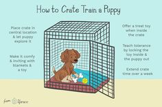 Learn why you should crate train puppies, how to choose the ideal crate, and simple steps for crate training your puppy. Learn why you should crate train puppies, how to choose the ideal crate, and simple steps for crate training your puppy. Puppy Training Tips, Training Your Dog, Dog Crate Training, Potty Training, Puppy Crate Training Schedule, Kennel Training A Puppy, Puppy Feeding Schedule, Puppy Schedule, Service Dog Training