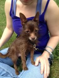 My dog's name was Chiquita.    Javier is an adoptable Chihuahua Dog in Manchester, NH. For up-to-date info like events, closings, new animals, success stories please- like Manchester Animal Shelter on Facebook! Meet Javier! He is...
