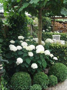 Back Garden Design, Flower Garden Design, Garden Landscape Design, House Landscape, Landscape Edging, Landscape Art, Landscape Paintings, Landscape Photography, Small Yard Design