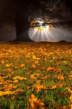 Night autumn (Poland) by Wojciech Cichalewski on 500px