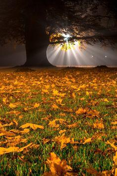Night autumn by Wojciech Cichalewski on 500px