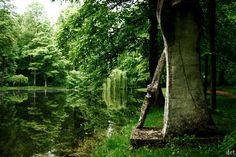 #orońsko #crp #drzewa #fotografia