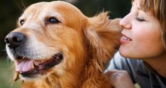 Top 5 Signs That Your Dog Is Aging