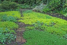 Best Ground Cover Plants (Instead of Lawn)