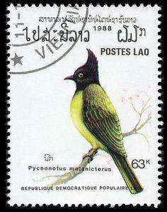 Republique Democratique Populaire Lao: Pycnonotus melanicterus - ( Bulbul preto- tampado) 1988