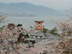 Itsukushima Shrine, Miyajima. Sakura season.