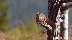 Sweatpants & Humor | Feeling Squirrelly, A GIF Tale
