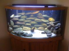 Kind of the setup I'm going for.. with black sand, tank and stand.. I imagine the cichlids popping with colour!
