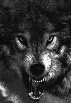 58 Super Ideas for tattoo sleeve leg wolves Wolf Tattoo Design, Tattoo Designs, Wolf Tattoos, Celtic Tattoos, Animal Tattoos, Wolf Tattoo Sleeve, Sleeve Tattoos, Chest Tattoo, Wolf Wallpaper