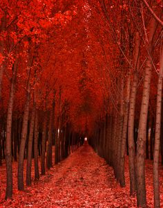 """(via 500px / Photo """"Red October"""" by johnny gregg)"""