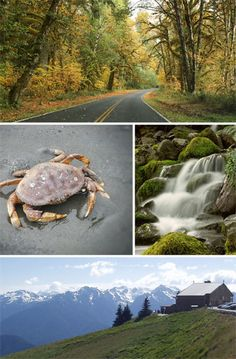 Trip Guide to Olympic National Park.