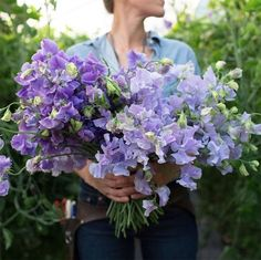 15 Flowers to Try This Spring