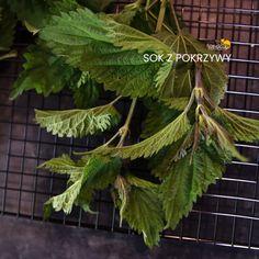 Herbalism, Plant Leaves, Flowers, Plants, Shake, Diet, Herbal Medicine, Smoothie, Plant