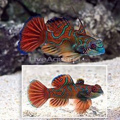 256 best saltwater aquarium images marine fish saltwater tank