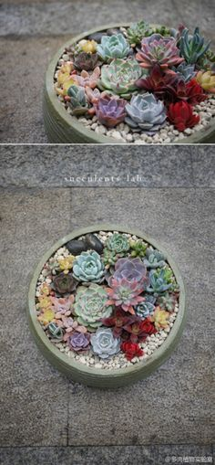 Fill Your Home With Glamorous Simple DIY Succulent Arrangements