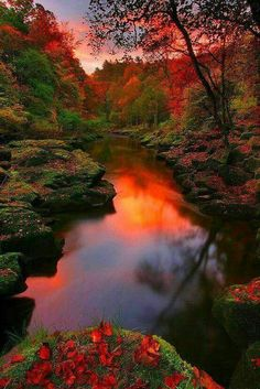 serene yet colorful river