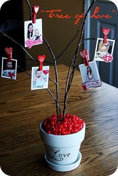 """valentines: What a sweet way to show love to your family? Get some twigs, ""plant"" them in a pot with red hots or some other red candies to weigh them down, use little clothespins to pin on pictures of their friends and family that they love!"" The blogger calls this The Tree of Love. It's easy to make and such a great craft for Valentine's Day! Full tutorial is here, under this pin! Valentines Day Party, Valentine Day Crafts, Valentine Day Love, Valentine Ideas, Happy Valentines Day Pictures, Valentine Stuff, Funny Valentine, Valentine Picture, Pinterest Valentines"