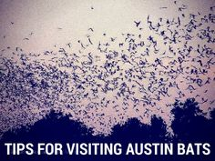 Ten Tips for Visiting the Bats of Austin - Suitcases and Sippy Cups