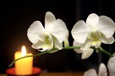 ExoticOrchids Flower white orchid wallpaper abstract image