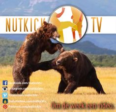 Nutkick TV: Get Entertained