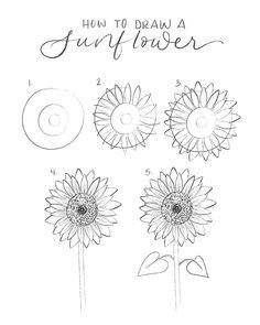 How to draw a sunflower in 5 easy steps: Draw 3 circles starting with a large.How to draw a sunflower in 5 easy steps:. Easy Butterfly Drawing, Simple Flower Drawing, Easy Flower Drawings, Flower Drawing Tutorials, Sunflower Drawing, Art Tutorials, Flower Art, Drawing Tips, Drawing Flowers