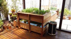 Aquaponia, um sistema integrado de cultivo de hortaliças e peixes. Confira como funciona.