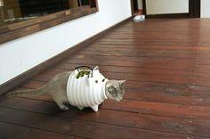 猫も捕れる。 pic.twitter.com/nJK8jNii4G