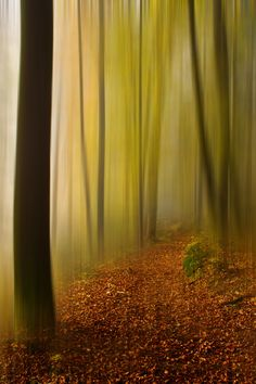 ˚Wonderland Wonderland, Mystical Forest, Reflection, Country Roads, Autumn, Nature, Pictures, Photography, Home Decor