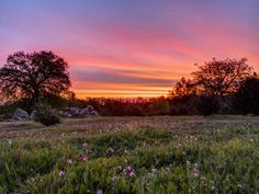 Todays March 10, 2015 Dawn From My Backyard In Redding California. Oc3000x2250