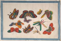 Butterflies and other insects from an album containing twelve paintings of insects (19th century). Artist unknown. China. Image and text courtesy The Metropolitan Museum of Art.
