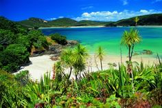 Journey into Northland New Zealand by road, water, cycle, or foot. When you experience any or all of the road and water-based Northland Journeys. New Zealand Beach, New Zealand North, The Places Youll Go, Places To See, New Zealand Image, Bay Of Islands, New Zealand Houses, Travel And Leisure, Beautiful Beaches