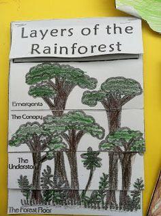 Little Beans: The Great Kapok Tree Lapbook Project--brazil Rainforest Classroom, Rainforest Crafts, Rainforest Project, Rainforest Activities, Rainforest Habitat, Rainforest Theme, Rainforest Animals, Amazon Rainforest, Jungle Crafts