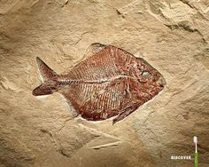 Fish Fossil, Green River, WY