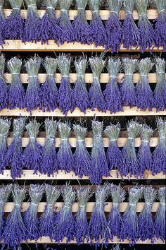 Beautiful pictures of lavender | South of France | Culture de la lavande philippesaharoff-photo.com